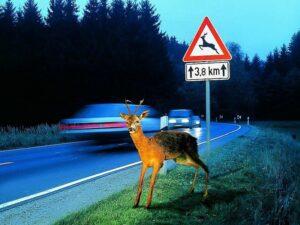 Seguro coche animales cinegéticos